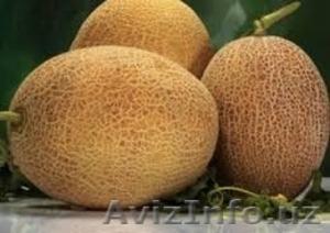 """Дыни """"чарджоусикие"""" желтые  - Изображение #1, Объявление #1475948"""